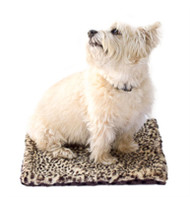 Brown Cheetah Minkie Binkie Blanket