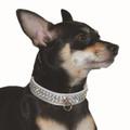 Silver Celebrity Collar