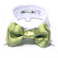 White Shirt Dog Collar with Apple Green Bow Tie
