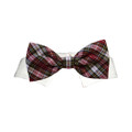 Pooch Outfitters Jeremy Shirt Collar