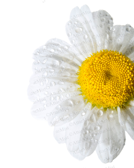Rain Flower by #AttarMistUK