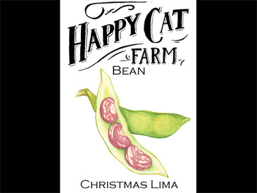 Christmas Lima Bean