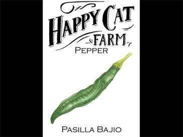 Pasilla Bajio Pepper