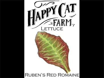 Ruben's Red Romaine Lettuce