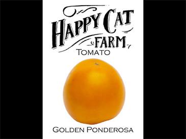 Golden Ponderosa