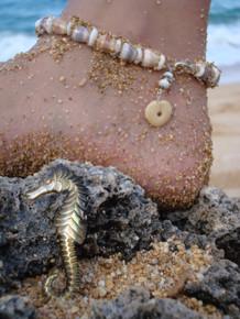 Pearly Sea Horse