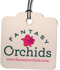 Fantasy Orchids