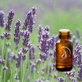 Lavender Oil - 1/2 ounce