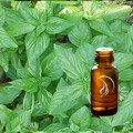 Basil Oil - 1/2 Ounce