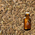 Carrot Seed Oil - 1/2 Ounce