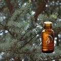 Cedarwood Atlas Oil - 1/2 Ounce