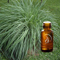 Citronella Oil - 1/2 Ounce