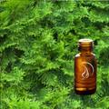 Cypress Oil - 1/2 Ounce