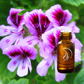 Geranium Rose Oil - 1/2 Ounce