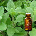 Marjoram Oil - 1/2 Ounce