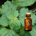 Patchouli Oil - 1/2 Ounce