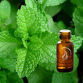 Peppermint Oil - 1/2 Ounce
