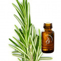 Rosemary Oil - 1/2 Ounce