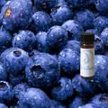 Bilberry Tincture
