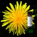 Dandelion Tincture