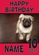 Baby Pug Dogs And Puppies Happy Birthday Kirsten