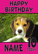 Beagle Puppy1 Dogs And Puppies Happy Birthday Kirsten