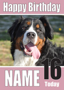 Bernese Mountain Dogs And Puppies Happy Birthday Kirsten