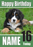 Bernese Mountain Pup Dogs And Puppies Happy Birthday