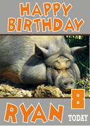 Large Pig Funny Birthday Card