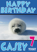 Baby Seal Funny Birthday Card