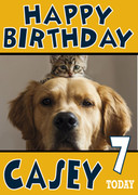 Kitten on top of labrador funny Birthday Card