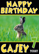Rabbint In Tall Grass Funny Birthday Card