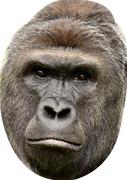 Gorilla  Tv Celebrity Face Mask