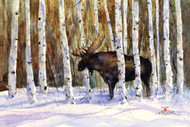 """A MOMENT'S REST"" limited edition moose print from an original watercolor painting by Dean Crouser. Scene depicts a bull moose taking a breather in a thicket of birch trees. be sure to visit Dean's other animal, bird and wildlife art! Signed and numbered, edition limited to 400 prints."