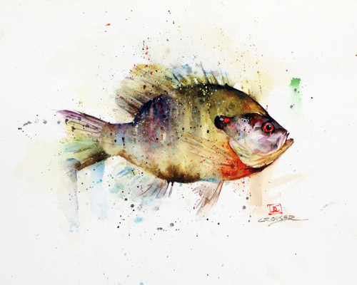"""""""BLUEGILL, Sketch"""" original watercolor painting by Dean Crouser. Measures approximately 7-1/2"""" tall by 11"""" wide. Artist retains all rights to future use of this painting. Here's a great opportunity to own a DC original!"""