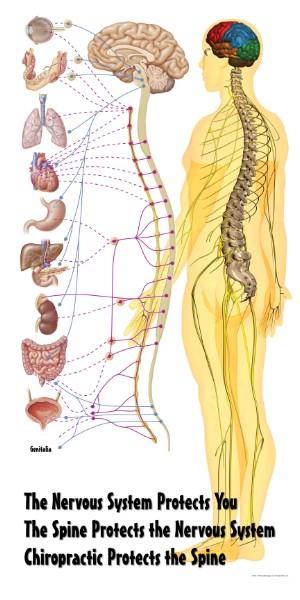 nervous-system-poster.jpg