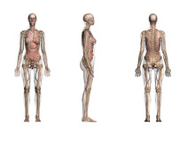 Female Anatomy 3 Views  Chart  Life-Sized Collection
