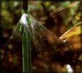 Large Planter Watering Spray Stake