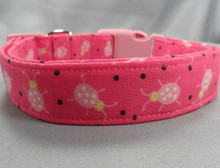 Hot Pink Ladybugs Dog Collar