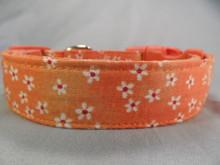 Little Daisy Flowers on Orange Dog Collar Rescue Me Collar