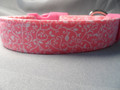 Girl Dog Collar, Pretty Scroll on Bright Pink Rescue me Dog Collar