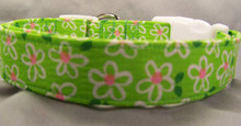 Funky Flowers on Lime Green Dog Collar