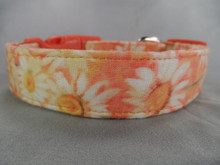 Daisy Flowers on Peach Dog Collar