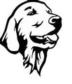 Wall Decals and Stickers - Golden retriever face