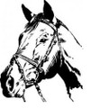 Wall Decals and Stickers-Horse