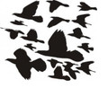 Wall Decals and Stickers-Migrating birds