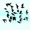 Wall Decals and Stickers – Birds in Flights