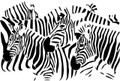 Wall Decals and Stickers – Zebra Design Optical Illusion