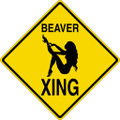 Wall Decals and Stickers - Beaver