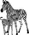 two Zebras Picture Art  Home Decor Sticker  Vinyl Wall Decal  21x21